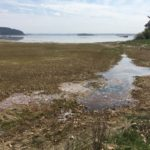 Marsh Scape