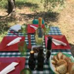 Lunch in an olive grove